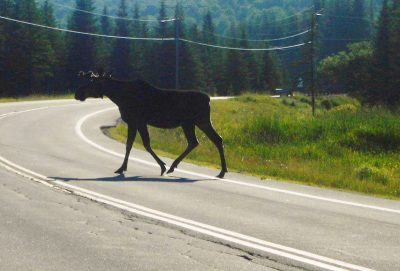 Mostly Moose Cycling Tour